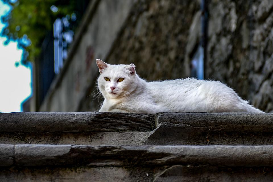 Cat, Lovely, Love, Pet, Cute, Animal, Kitten, Portrait