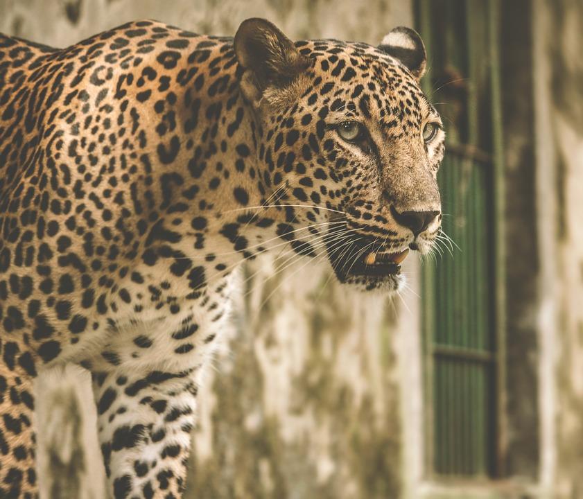 Animal, Animal Lover, Animal Photography