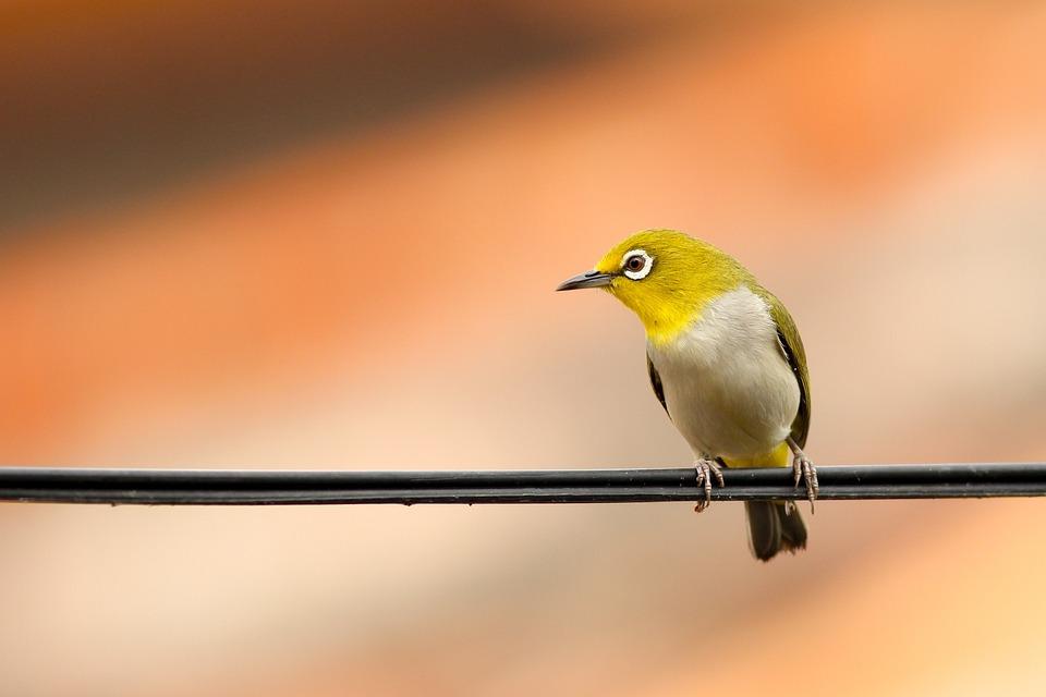 Animal, Bird, Macro, Perched, Plumage