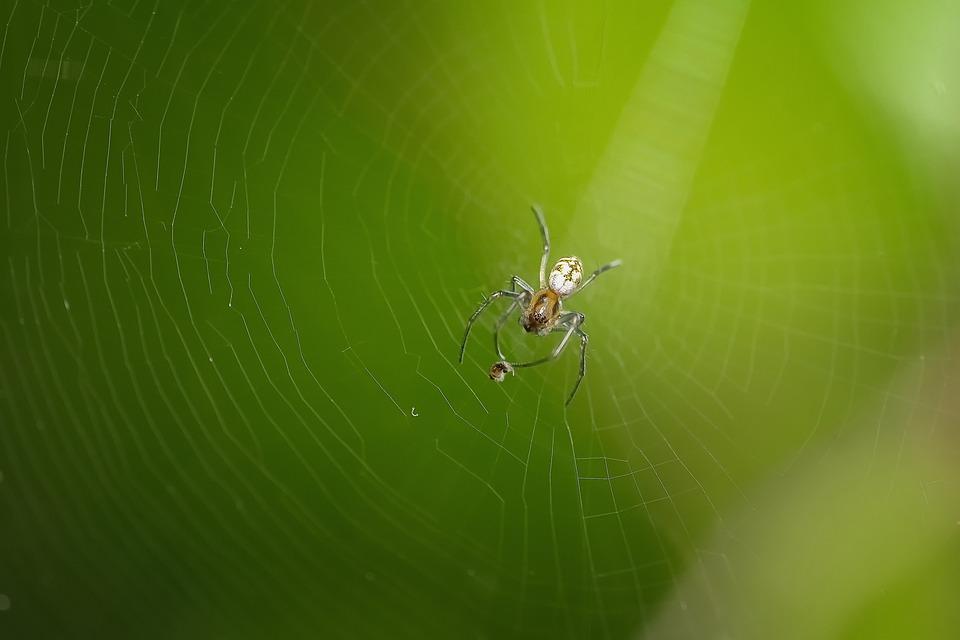 Spider, Macro, Animal, Nature, Color