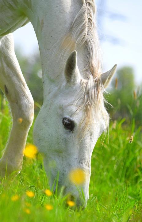 Horse, Animal, Mammal, Equine, Grazing, Graze