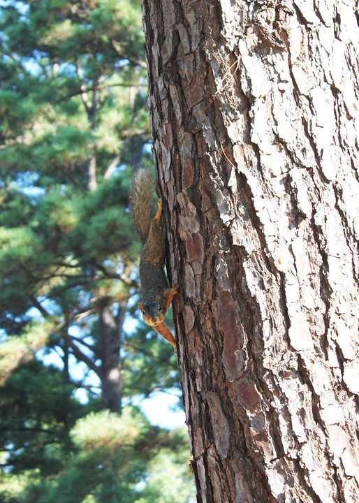 Wildlife, Tree, Pin, Nature, Animal, Mammal, Natural