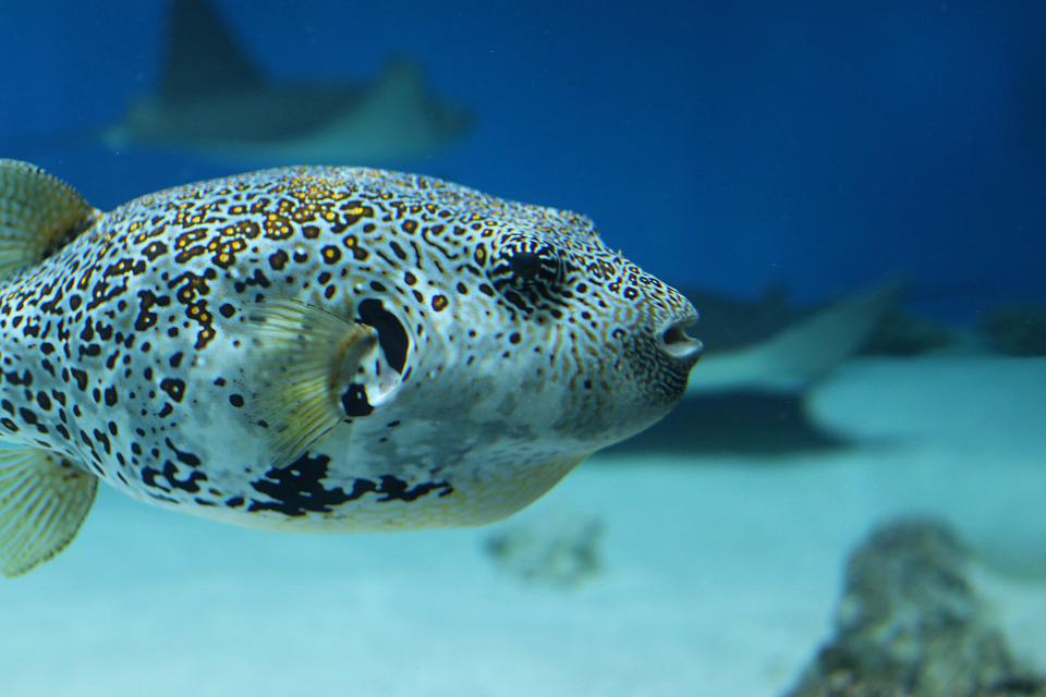 Fish, Marine, Ocean, Animal, Underwater
