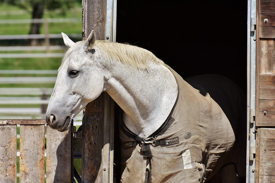 Horse, Mold, Stall, Box, Cute, White Horse, Animal