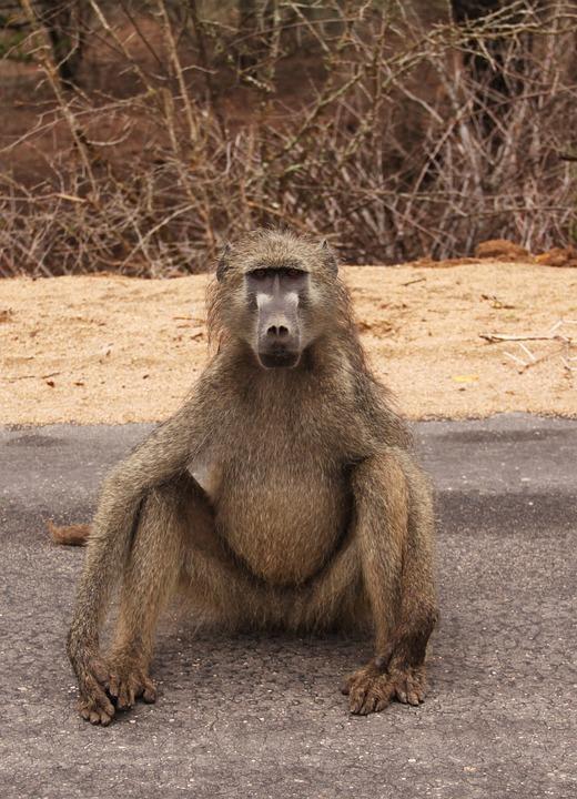 Mammal, Animal World, Monkey, Animal, Primate, Wild