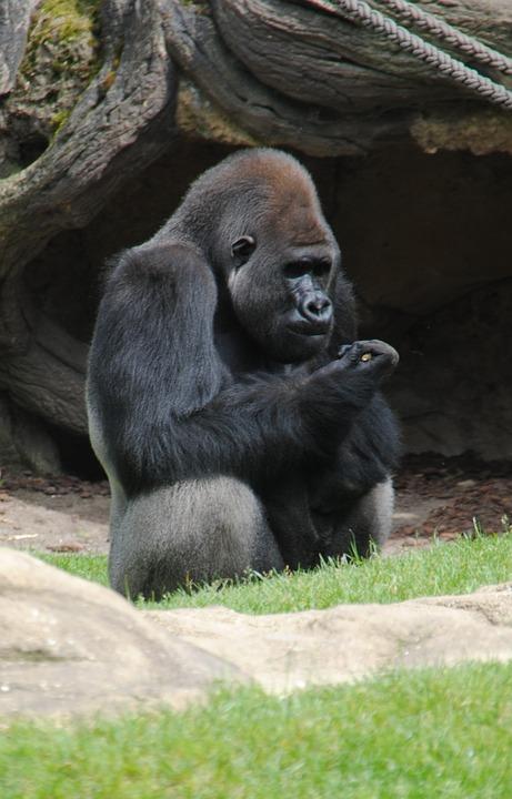 Animal, Monkey, Zoo