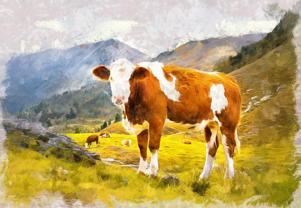 Cow, Mountain, Landscape, Nature, Animal