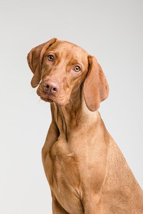 Dog, Animal, My Favorite, Studio, Cute