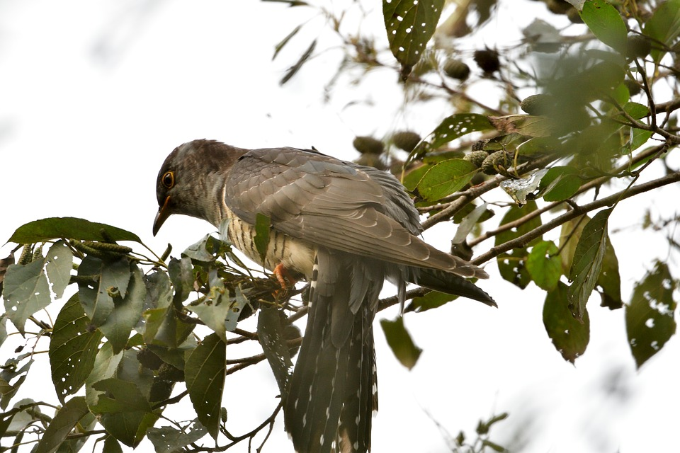 Free photo Animal Natural Bird Wood Wild Animals The List