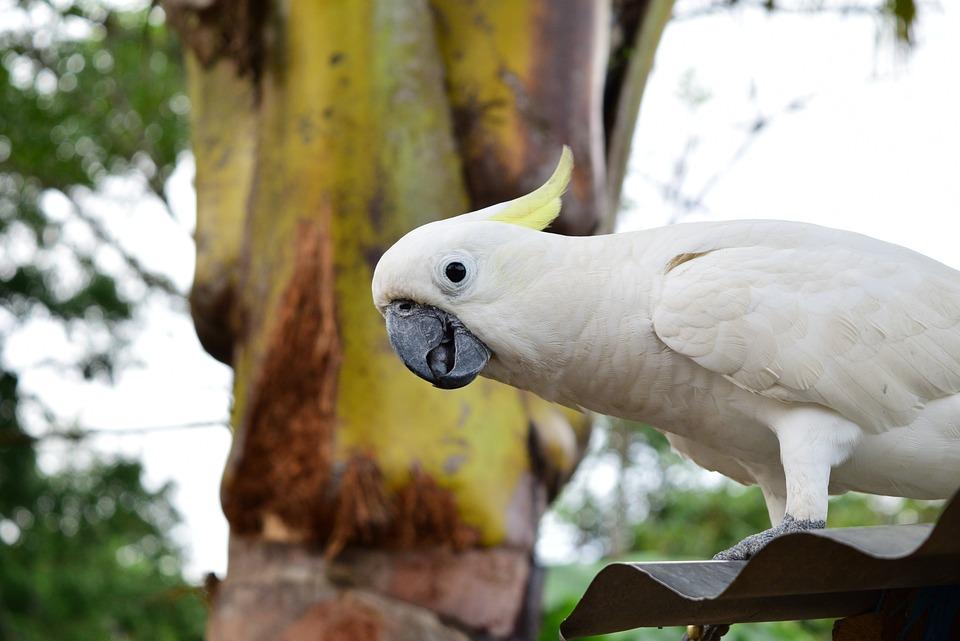 Parrot, Animal, Natural