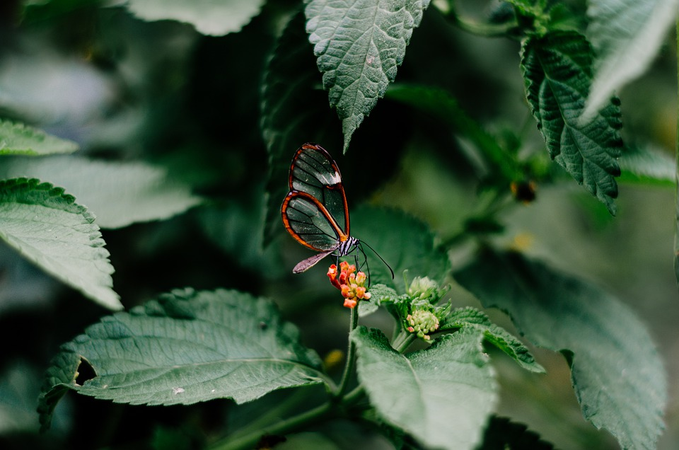 Butterfly, Nature, Insect, Animal, Wings, Bloom