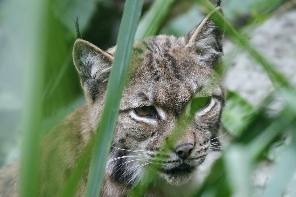 Animal, Nature, Fauna, Cat