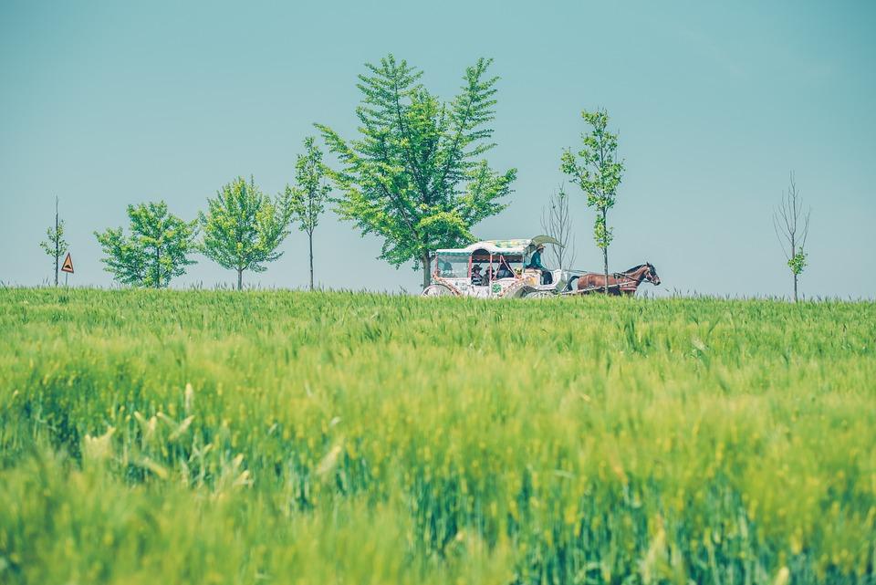 Cheongbori, Horse, Abstract, Nature, Animal, Wagon