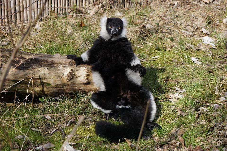 Monkey, Nature, Animal World, Mammal, Zoo, Animal