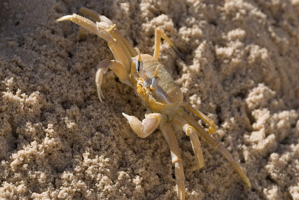 Wildlife, Nature, Animal, Wild, Outdoors, Yellow Crab