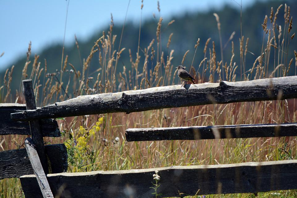 Bird, Wooden Fence, Rural, Animal, Nature, Country