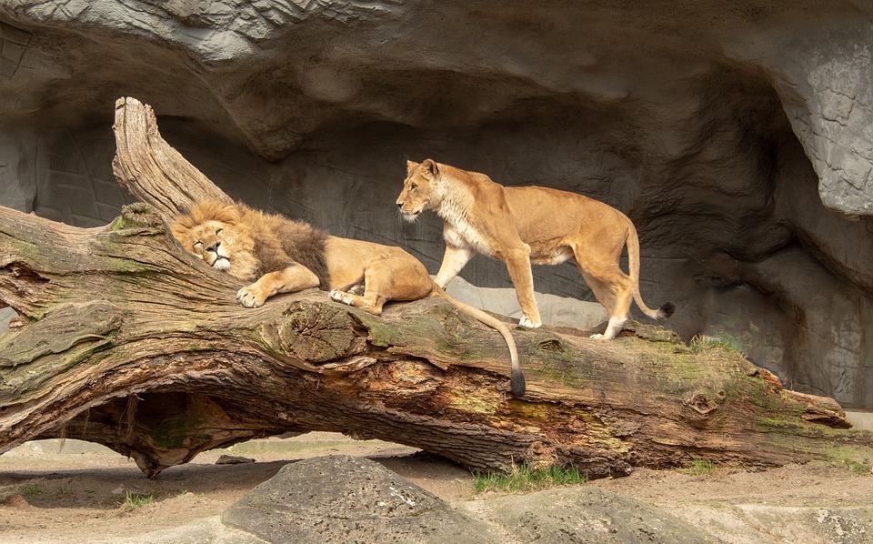 Nature, Mammal, Animal World, Animal, Wild, Carnivores