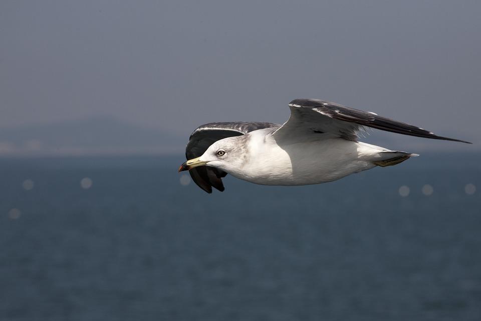 New, Sea, Nature, Seagull, Beach, Animal, Wing
