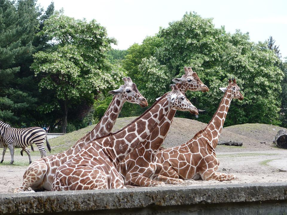 Animals, Zoo, Nature, Mammal, Animal, Zoological Garden