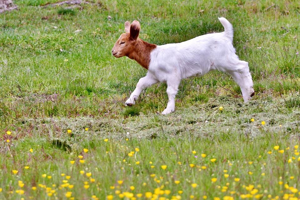 Kid, Animal, Nature, Newborn, Outdoor Life, Spring