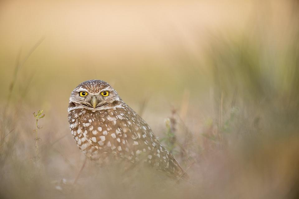 Animal, Owl, Avian, Bird, Feathers, Grass, Plumage