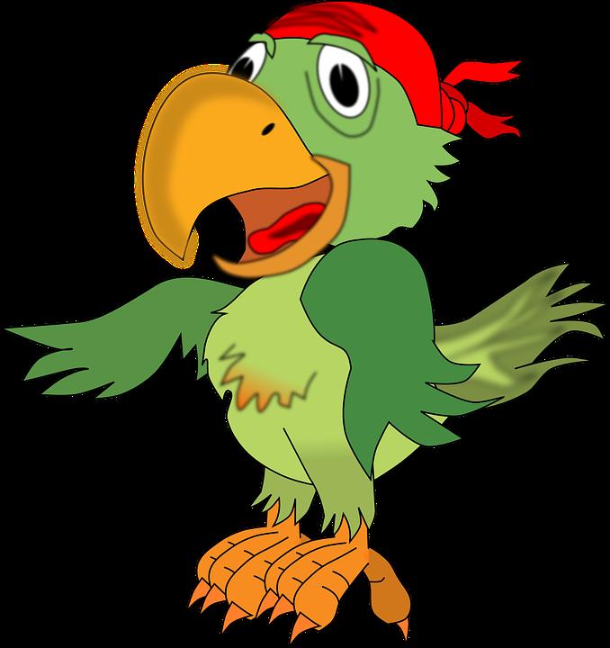 Parrot, Pirates, Animal