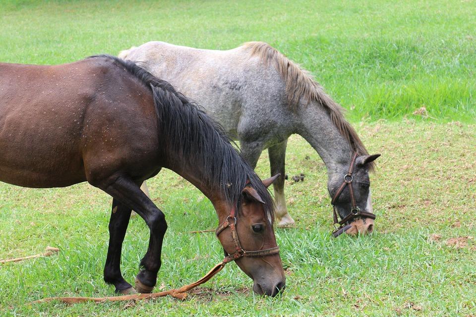 Farm, Animal, Pasture, Grass, Mammal, Field, Horse