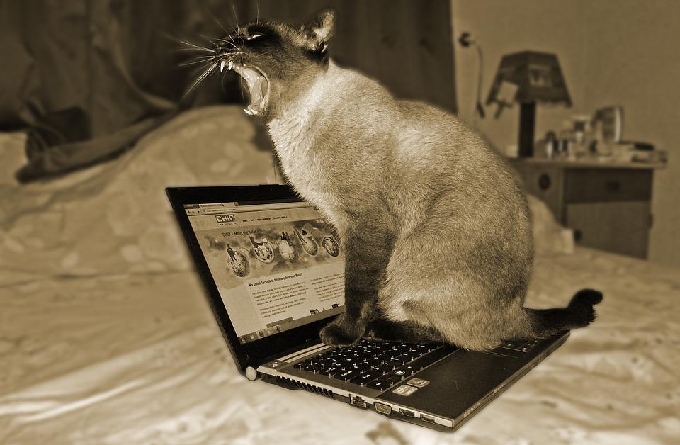Cat, Laptop, Pet, Animal, Computer Science