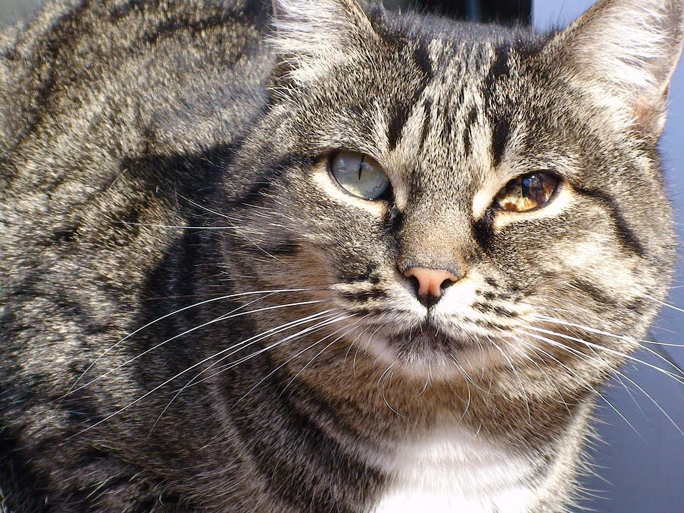 Cat, Cats, Pet, Pets, Animals, Animal, Cute, Cat Person