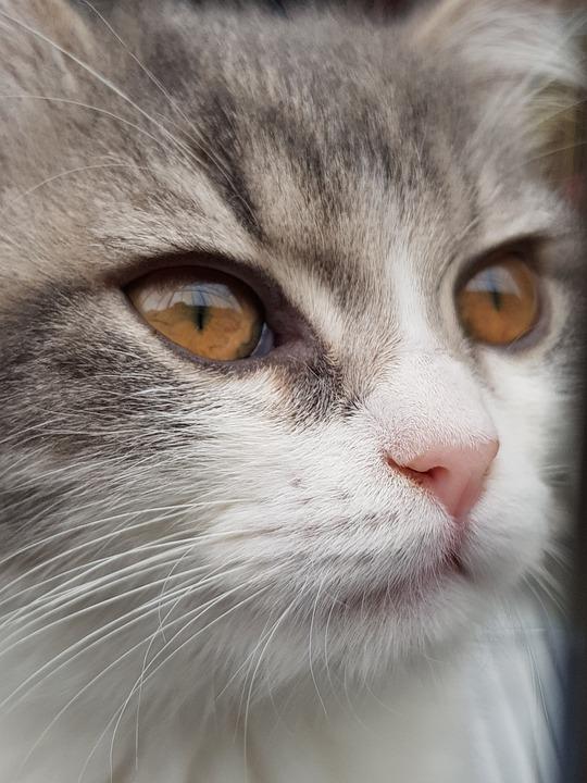 Cat, Animal, Portrait, Pet, Cute