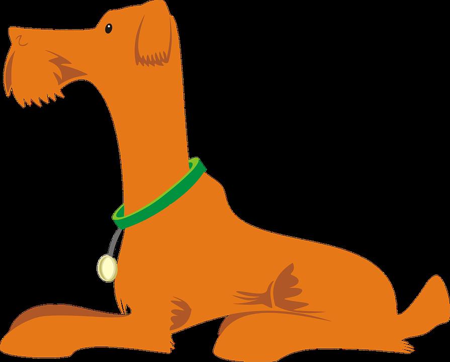 Animal, Canine, Dog, Orange, Pet, Profile