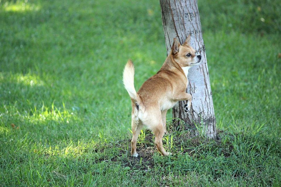 Pet, Puppy, Domestic, Animal, Cute, Friends, Canine