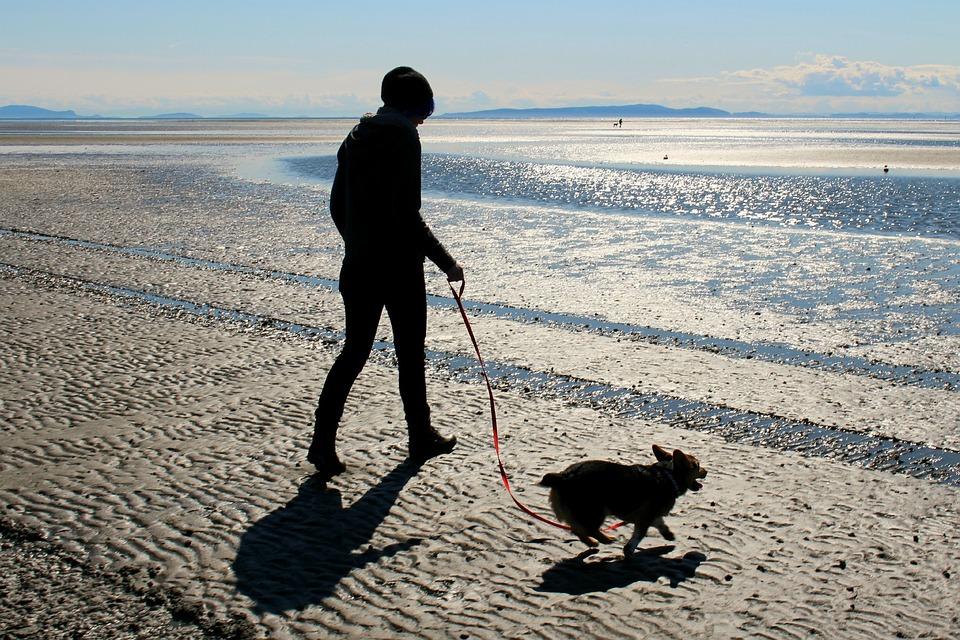 Beach, Dog, Corgi, Ocean, Sand, Sea, Puppy, Pet, Animal