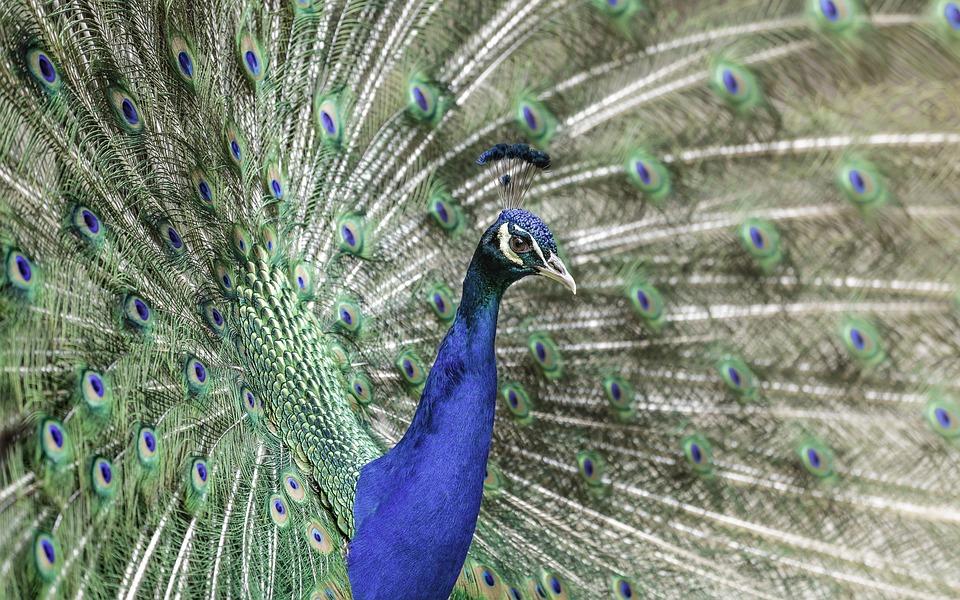 Animal, Animal Photography, Bird, Feathers