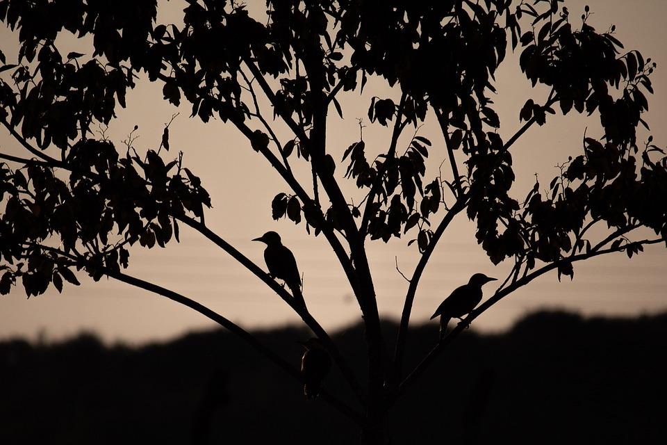 Birds, Bird, At, Nature, Plumage, Animal, Pity, Flight