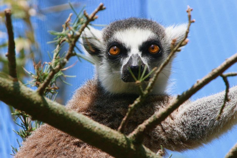 Animal, Planckendael, Zoo