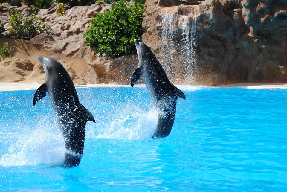 Dolphin, Pond, Animal, Dolphinarium, Jump, Traned