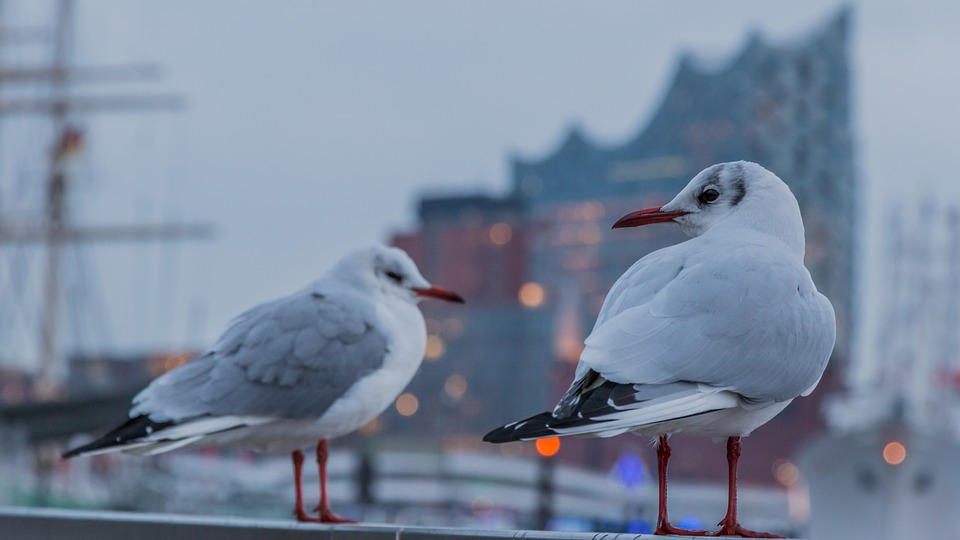 Bird, Animal World, Wing, Animal, Nature, Hamburg, Port