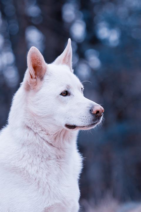 Dog, Hybrid, Pet, Animal, Animal Portrait