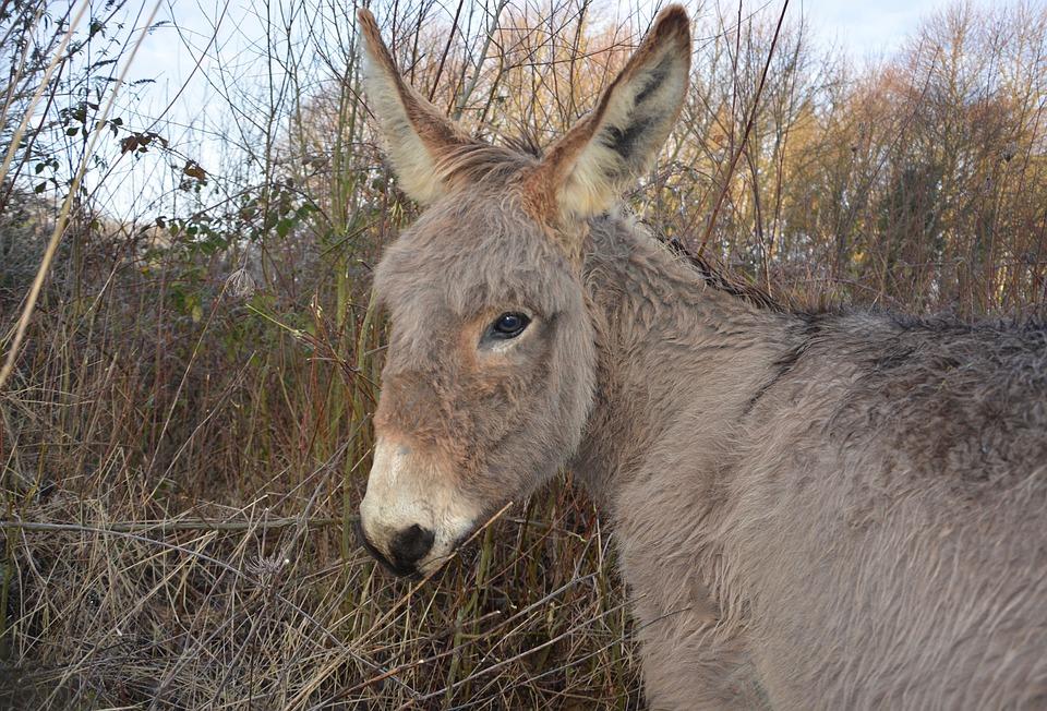 Donkey, Animal Portrait, Brown Eyes, Mammal, Animal