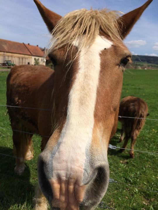 Horse, Head, Horse Head, Beauty, Close, Animal Portrait