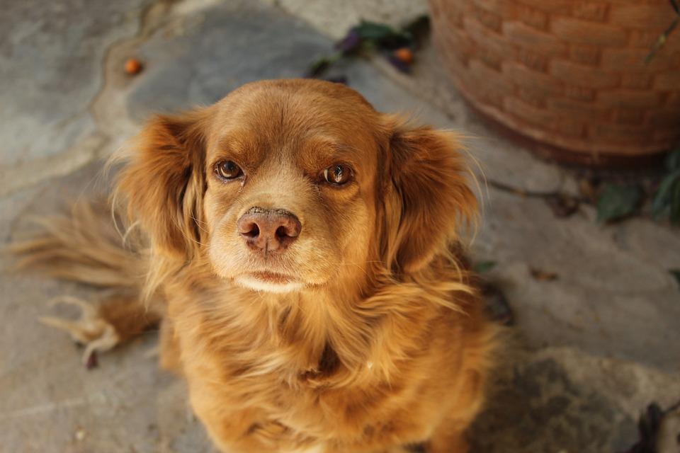 Dog, Pet, Animal, Cute, Canine, Portrait