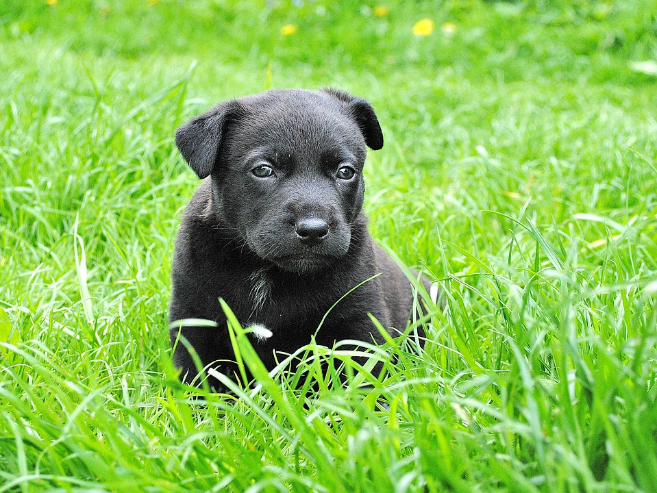 Dog, Puppy, Animal Portrait, Small Dog