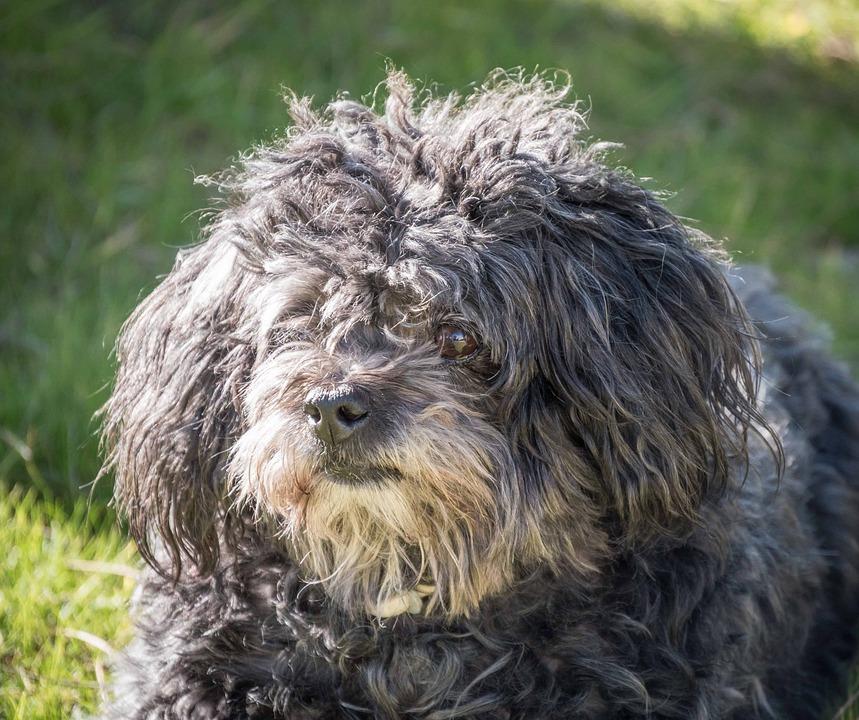 Dog, Bitch, Animal, Animals, Pets, Puppy, Profile Dog