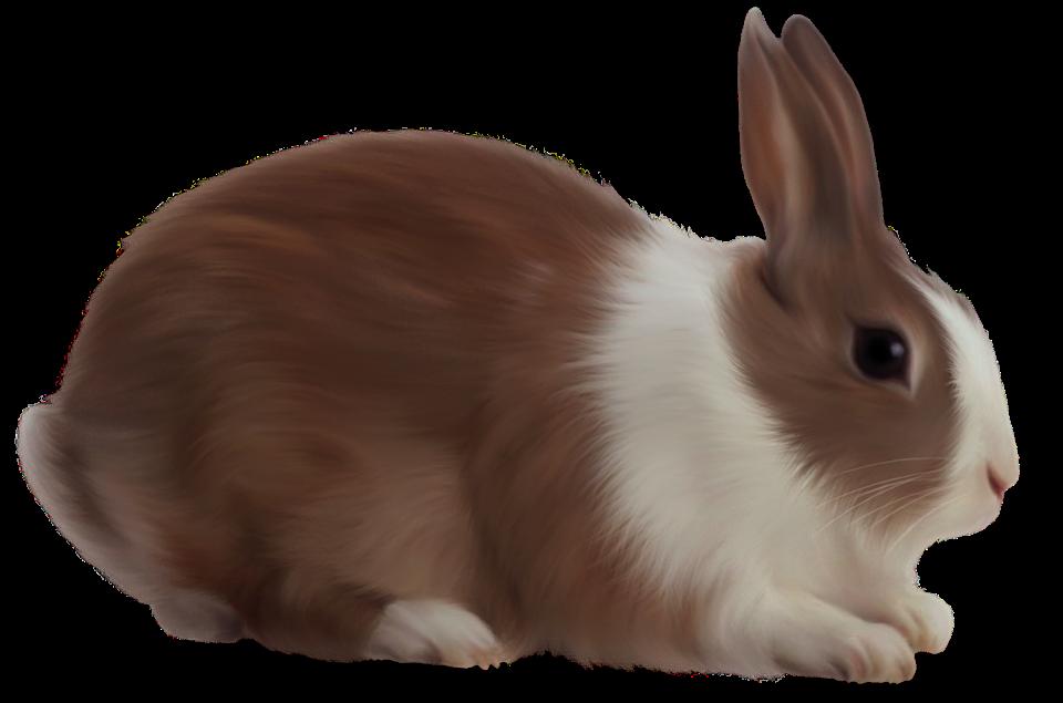 Animal, Rabbit, Isolated, Brown Rabbit