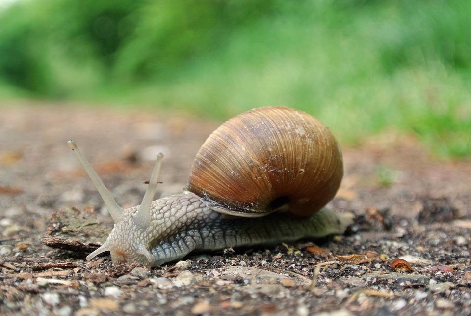 Snail, Macro, Close Up, Animal Recording, Shell, Nature