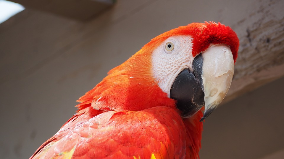 Parrot, Bird, Animal, Tropical, Feather, Red, Wild, Zoo