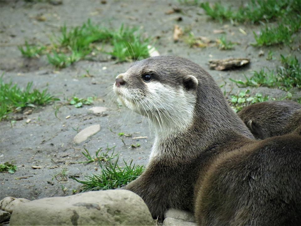 Otter, Adder, Animal, Reptile, Nature, Dangerous