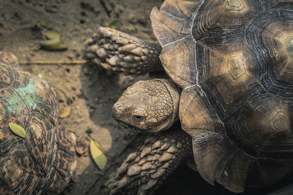 Animal, Nature, One Animal, Reptile