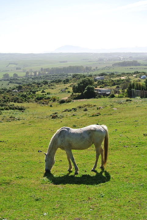 Meadow, Horse, Ride, Animal, Nature, Coupling, Grass